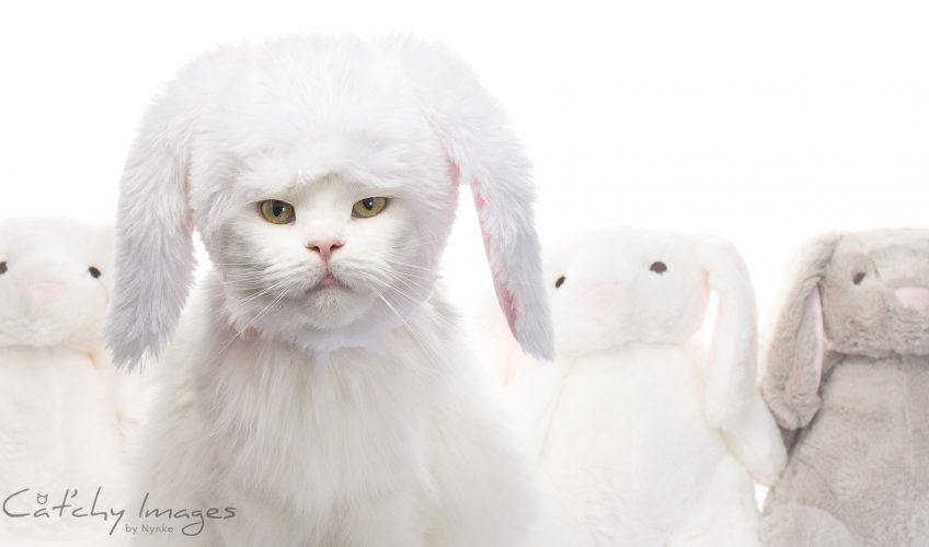 Zeer professionele kattenfotografie
