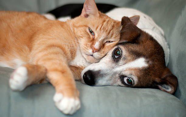 De hond blijft het favoriete huisdier